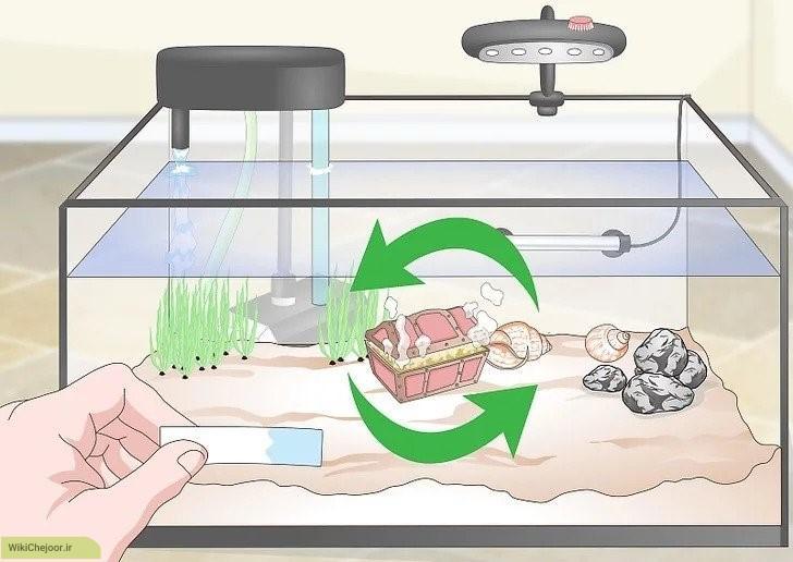 آماده سازی آب برای ماهی گوپی