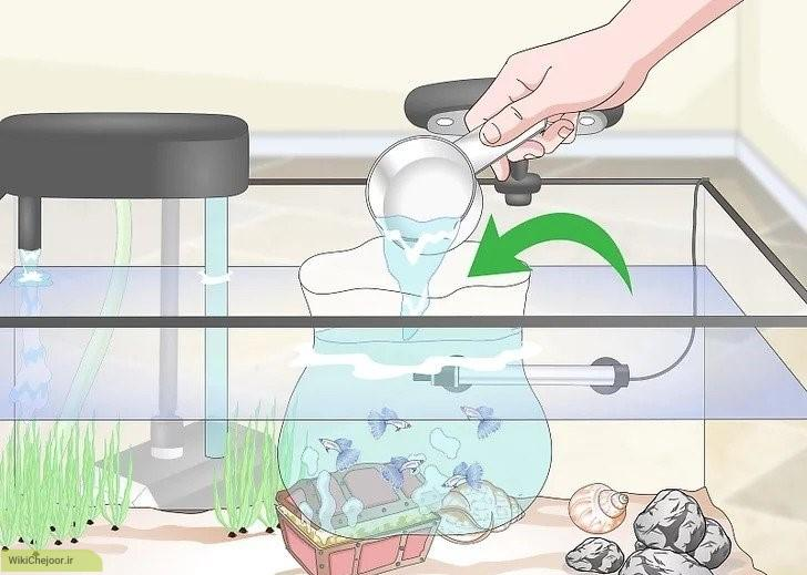 خو دادن ماهی گوپی به خانه جدید