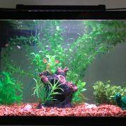 چگونه برای ماهی گوپی ( guppy ) ، بهترین زیستگاه را بسازیم ؟