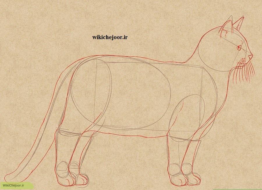 رسم گربه تمام قد