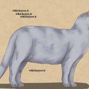 چگونه نقاشی گربه تمام قد انجام دهیم؟