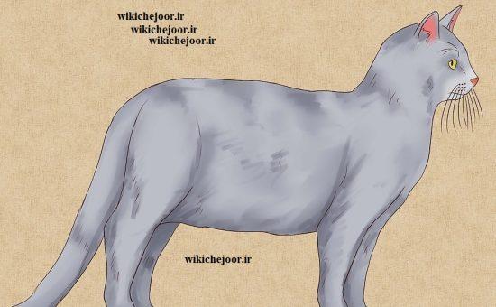 نقاشی گربه تمام قد