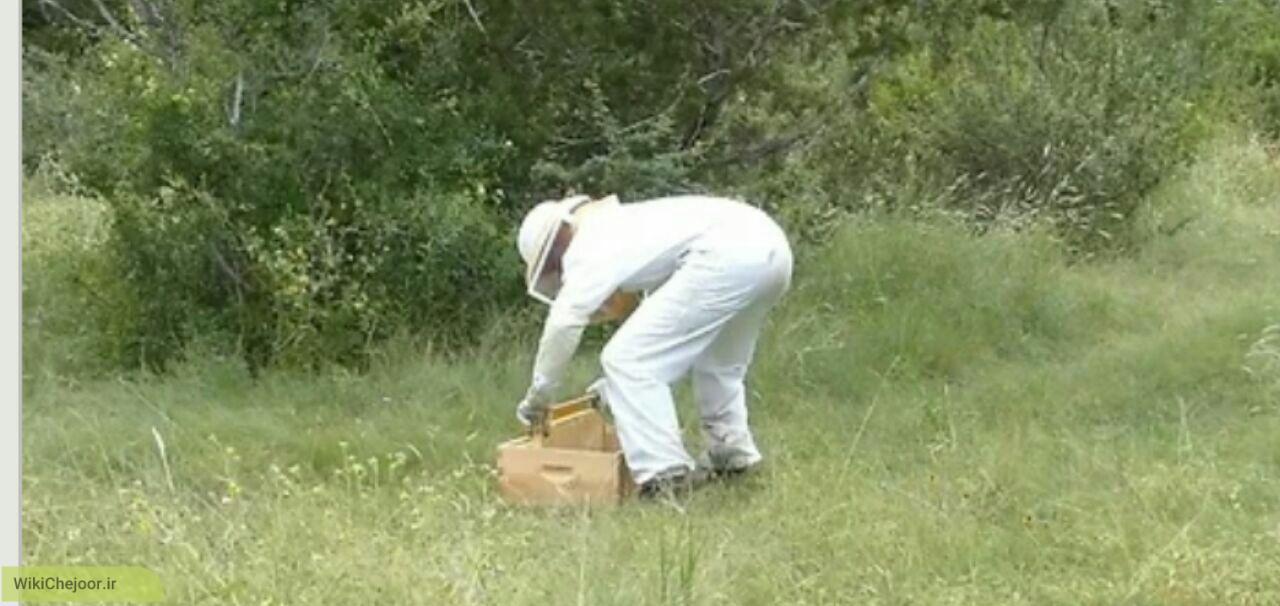 چگونگی پرورش زنبور عسل