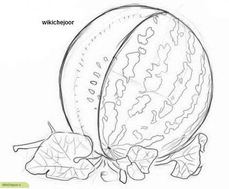 طراحی هندوانه