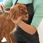 چگونه موی سگ را برس بکشیم؟