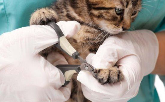 آموزش چگونگی کوتاه کردن ناخن های گربه