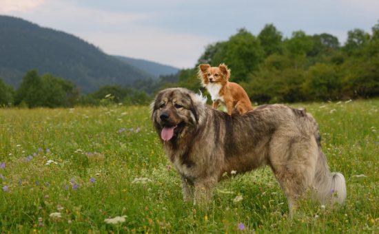 چگونه با شناخت نژاد سگ ها، سگ مناسبی انتخاب کنیم؟