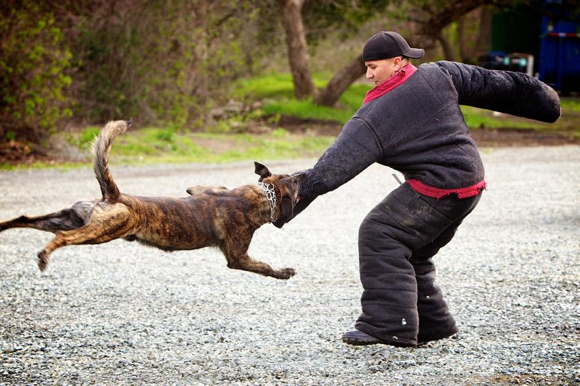 هنگام حمله سگ وحشی چه باید کرد؟