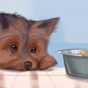 چگونه از آلوده شدن سگ به بیماری جلوگیری کنیم؟