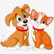 نگهداری سگ یا گربه کدام بهتر است؟