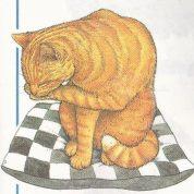چگونه یک بچه گربه بزرگ می شود؟