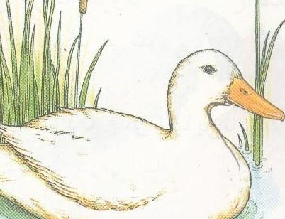 چگونه یک اردک رشد می کند؟