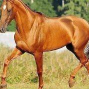 آشنایی با دنیای اسب ها