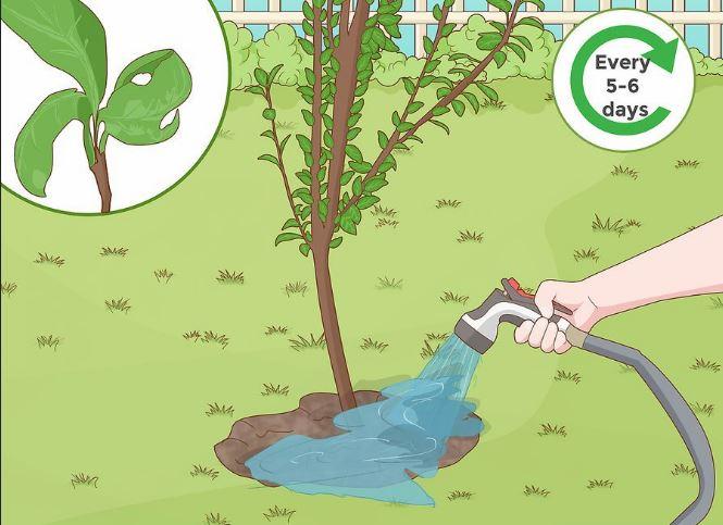 مراقبت از درخت خود