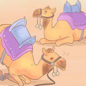چگونه شتر سواری کنیم؟