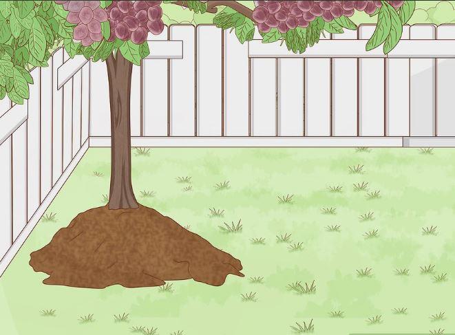 انتخاب درخت آلوی خود و محل کاشت آن