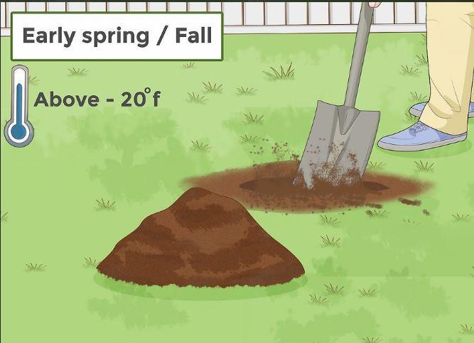 پیوند زدن درخت از نهال