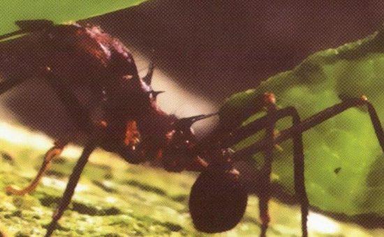 چگونه دنیای مورچه ها را بشناسیم؟