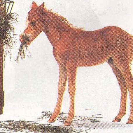 بزرگ شدن  کره اسب