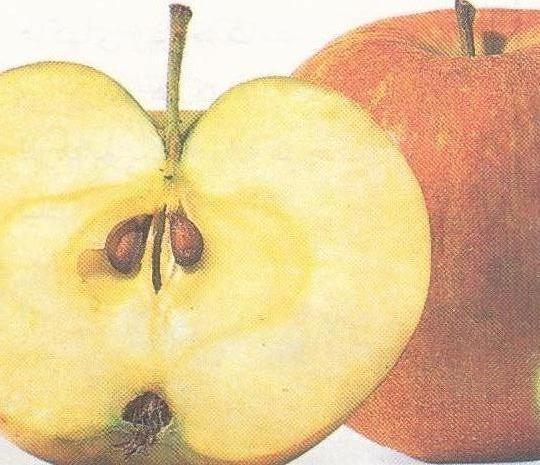 میوه آبدار
