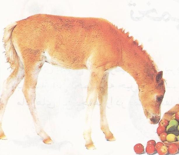 خوردن سیب