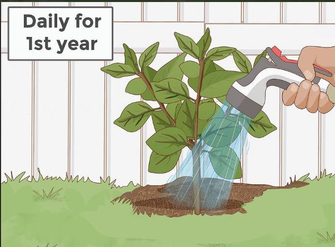 مراقبت از درختان