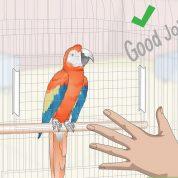 چگونه به طوطی صحبت کردن یاد بدیم؟