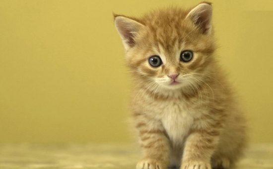 آیا موی گربه باعث مرگ انسان میشود؟