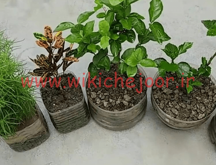 چگونه یک معجون جهت ضدعفونی و تقویت رشد گیاهان درست کنیم؟