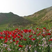 چگونه منطقه گردشگری چم آسیاب را بشناسیم؟