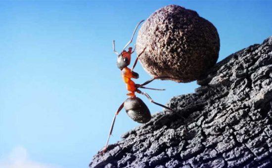 چگونه همه تلاش مان را به کار بگیریم ولی فکر نتیجه نباشیم
