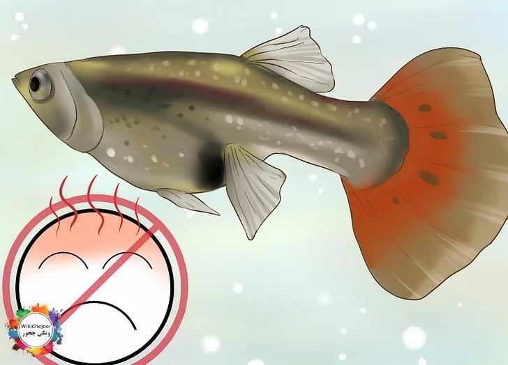 مراقبت از ماهی باردار