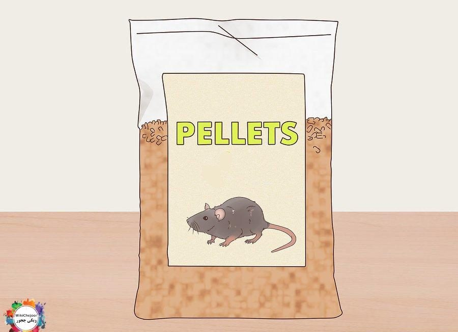 how-to-feed-a-pet-mouse