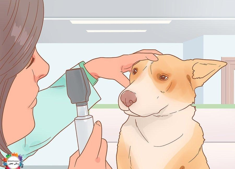 How to Keep Your Pets Happy
