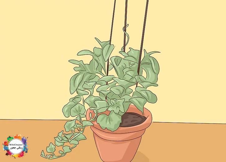انتقال بذرها به گلدان