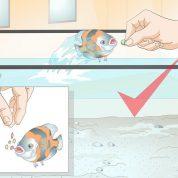 چگونه ماهی خود را برای انجام ترفندها آموزش دهیم؟
