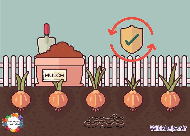 محافظت از سبزیجات در برابر سرما