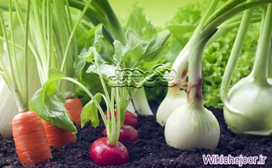 چگونه در فصل زمستان سبزیجات پرورش دهیم؟
