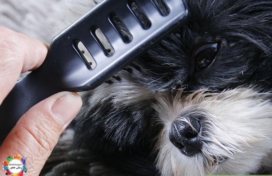 How to Maintain a Pet's Hair