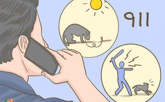 رفتار با حیوانات | چگونه با حیوانات دوستانه رفتار کنیم؟