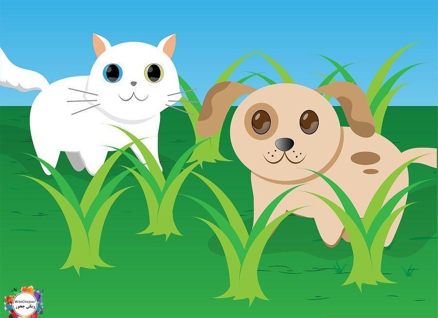 مراقبت از حیوانات خانگی | چگونه از حیوانات خانگی خود مراقبت کنید؟