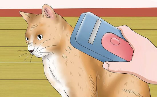 گربه ولگرد | چگونه یک گربه سرگردان را از گربه خود دور نگه داریم؟
