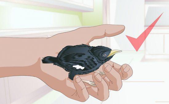 چگونه از پرنده مراقبت کنیم؟