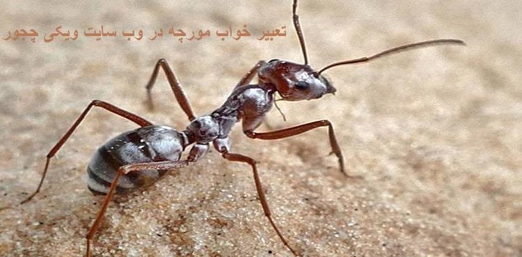 تعبیر خواب مورچه و موریانه